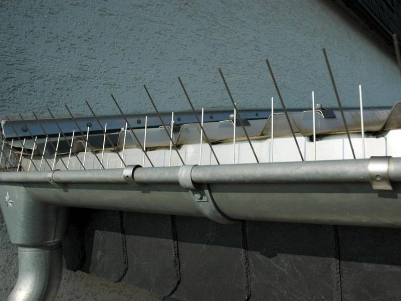 Stainless Steel Gutter Spikes Against Pigeons And Seagulls